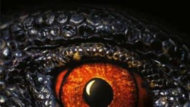 Photo of Douglas Preston – T-Rex