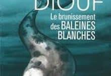 Photo de Boucar Diouf – Le brunissement des baleines blanche