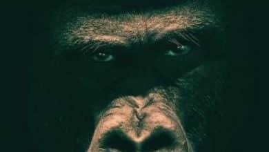 James Patterson - Zoo