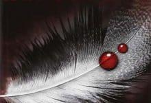 Photo de Chasseuse de vampires – Tome 1 à 7