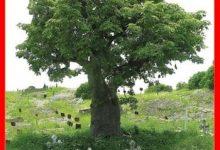 Photo de Boucar Diouf – Rendez à ces arbres ce qui appartient à ces arbres