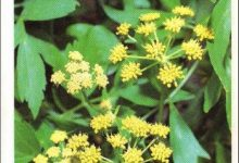 Photo de Les plantes médicinales et condimentaires au jardin