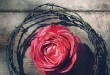 Photo de Elizabeth Wein – Rose sous les bombes