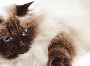 David Michie - Le chat du Dalaï-Lama et l'art de ronronner