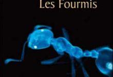 Bernard Werber - Les Fourmis